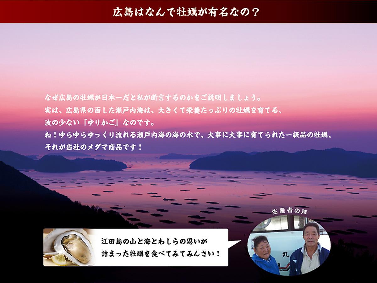 広島はなんで牡蠣が有名なの?実は、広島県の面した瀬戸内海は、大きくて栄養たっぷりの牡蠣を育てる、波の少ない「ゆりかご」なのです。
